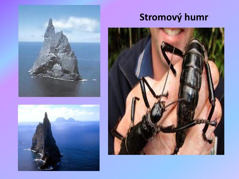 Stromový humr