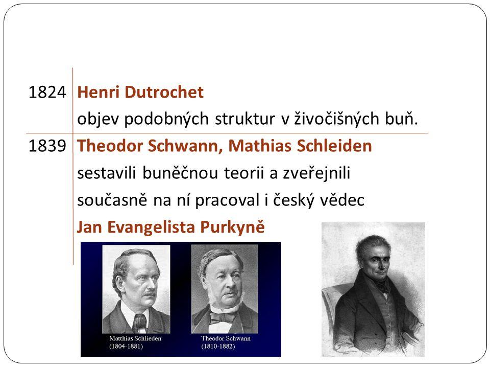 1824 Henri Dutrochet objev podobných struktur v živočišných buň.