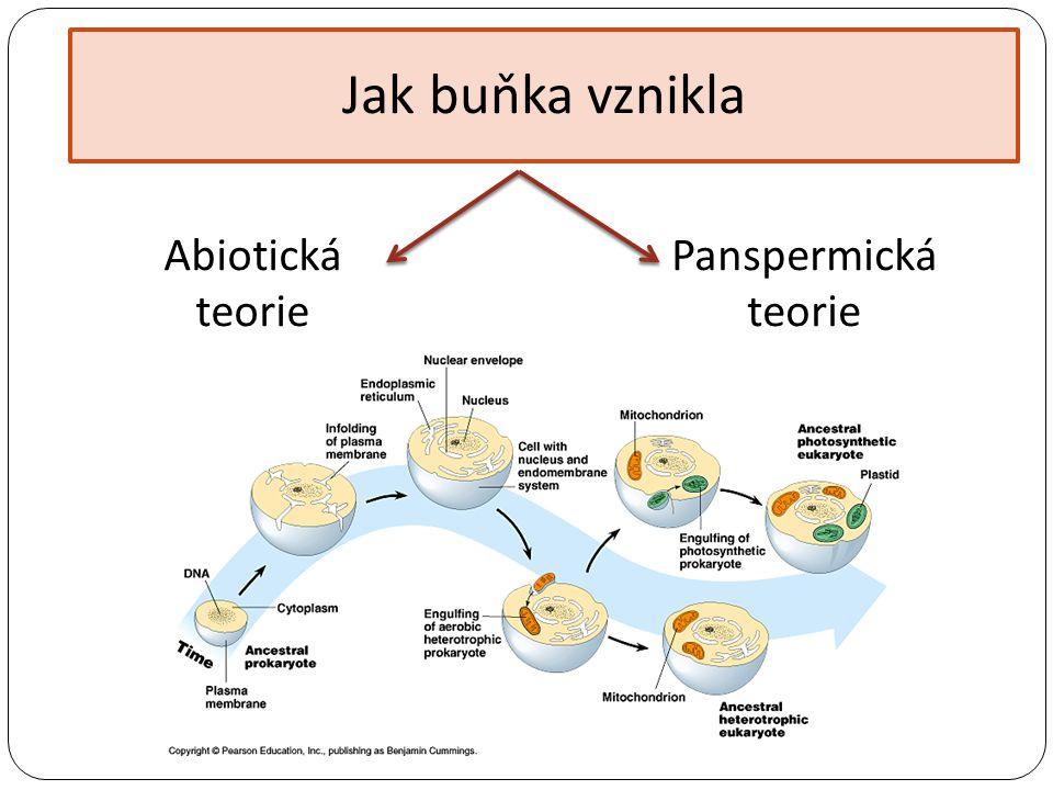 Jak buňka vznikla Abiotická teorie Panspermická teorie