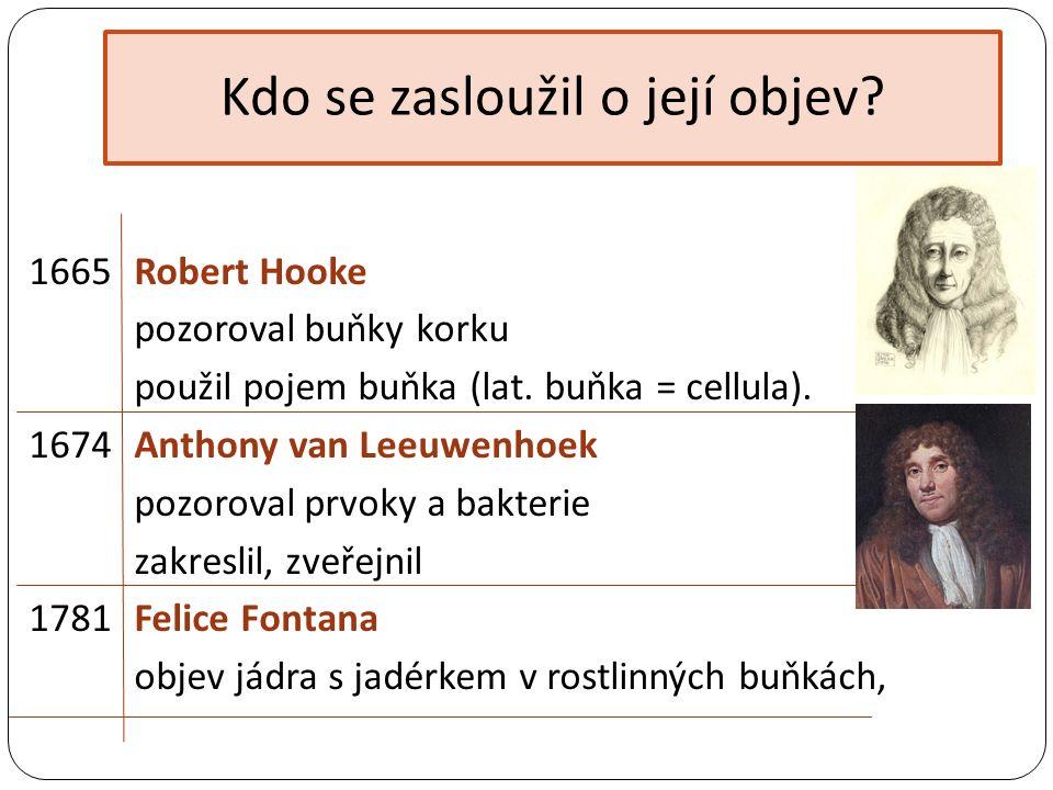 Kdo se zasloužil o její objev.1665 Robert Hooke pozoroval buňky korku použil pojem buňka (lat.