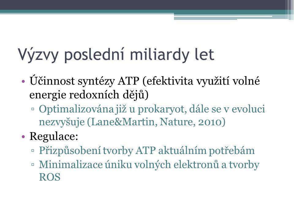 Výzvy poslední miliardy let Účinnost syntézy ATP (efektivita využití volné energie redoxních dějů) ▫Optimalizována již u prokaryot, dále se v evoluci nezvyšuje (Lane&Martin, Nature, 2010) Regulace: ▫Přizpůsobení tvorby ATP aktuálním potřebám ▫Minimalizace úniku volných elektronů a tvorby ROS