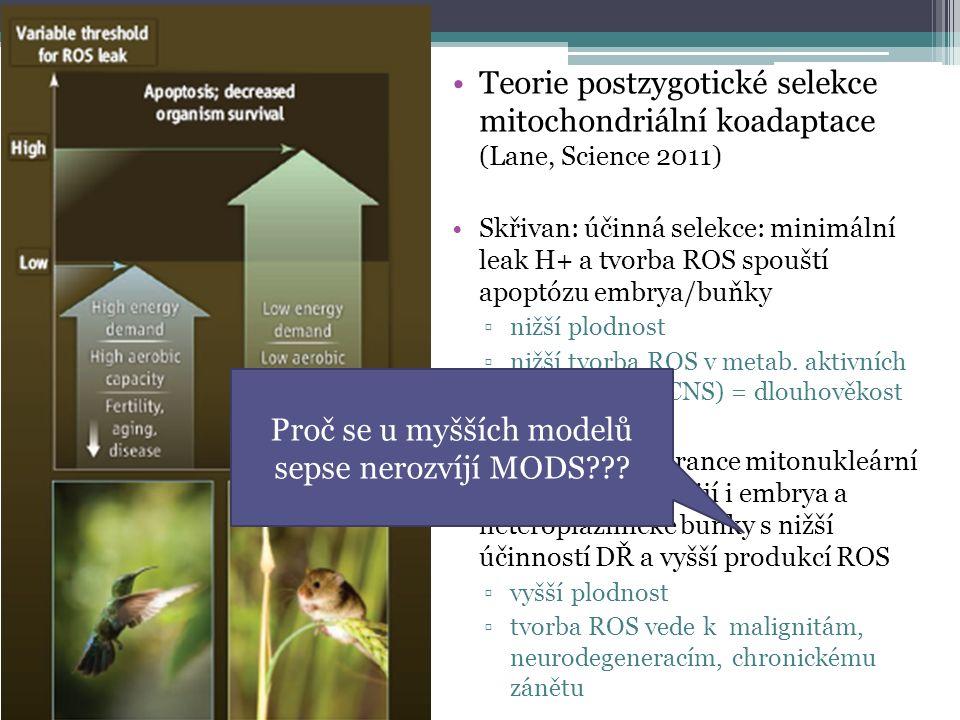 Teorie postzygotické selekce mitochondriální koadaptace (Lane, Science 2011) Skřivan: účinná selekce: minimální leak H+ a tvorba ROS spouští apoptózu embrya/buňky ▫nižší plodnost ▫nižší tvorba ROS v metab.