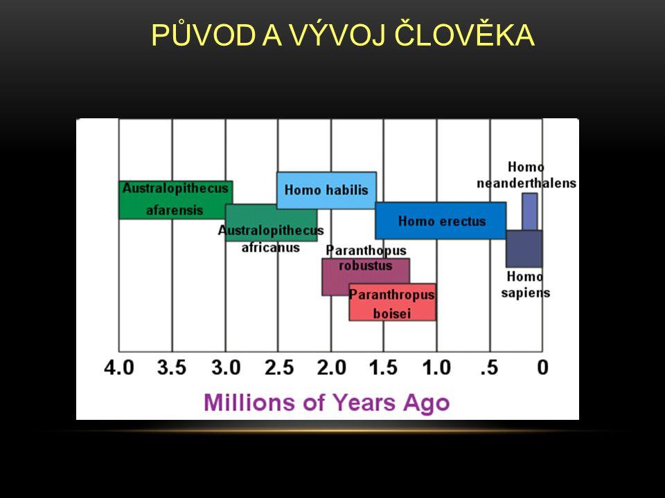 Asi před 6 miliony lety se cesty lidoopů a lidí rozcházejí Jedním z prvních hominidů v lidské linii byl Australopiték Žil v Africe před 4 – 1,5 miliony lety Měl znaky lidoopů i lidí Chodil po dvou Velikost: 1–1,7m; 30–65 kg Velikost mozkovny: 400 – 520 cm 3 Používal jednoduché nástroje