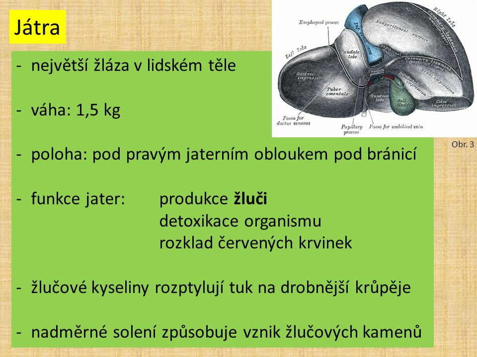 Játra -největší žláza v lidském těle -váha: 1,5 kg -poloha: pod pravým jaterním obloukem pod bránicí -funkce jater:produkce žluči detoxikace organismu rozklad červených krvinek -žlučové kyseliny rozptylují tuk na drobnější krůpěje -nadměrné solení způsobuje vznik žlučových kamenů Obr.