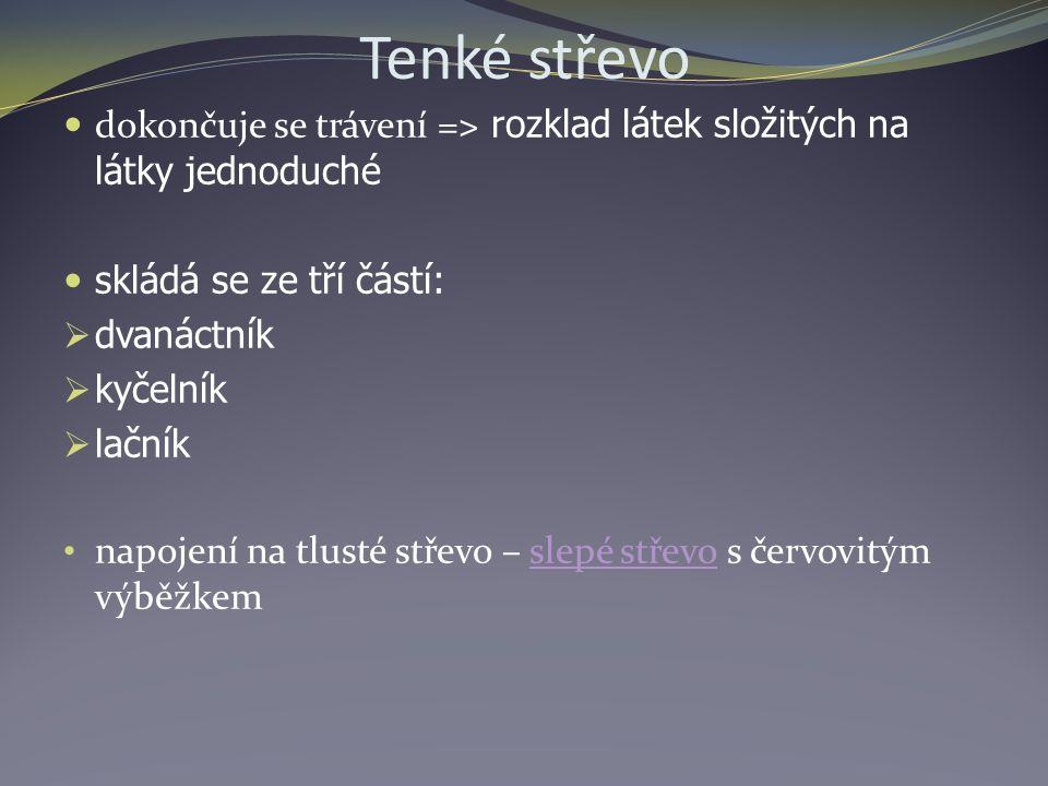 Tenké střevo dokončuje se trávení = ˃ rozklad látek složitých na látky jednoduché skládá se ze tří částí:  dvanáctník  kyčelník  lačník napojení na tlusté střevo – slepé střevo s červovitým výběžkemslepé střevo