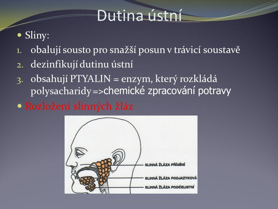 Dutina ústní Sliny: 1. obalují sousto pro snažší posun v trávicí soustavě 2. dezinfikují dutinu ústní 3. obsahují PTYALIN = enzym, který rozkládá poly