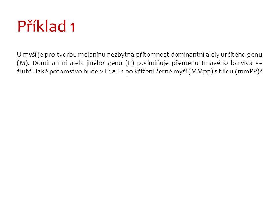 Příklad 1 U myší je pro tvorbu melaninu nezbytná přítomnost dominantní alely určitého genu (M).