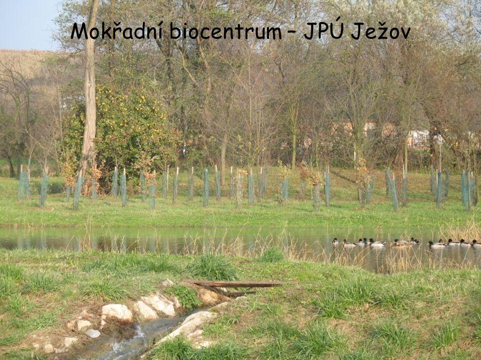 Mokřadní biocentrum – JPÚ Ježov