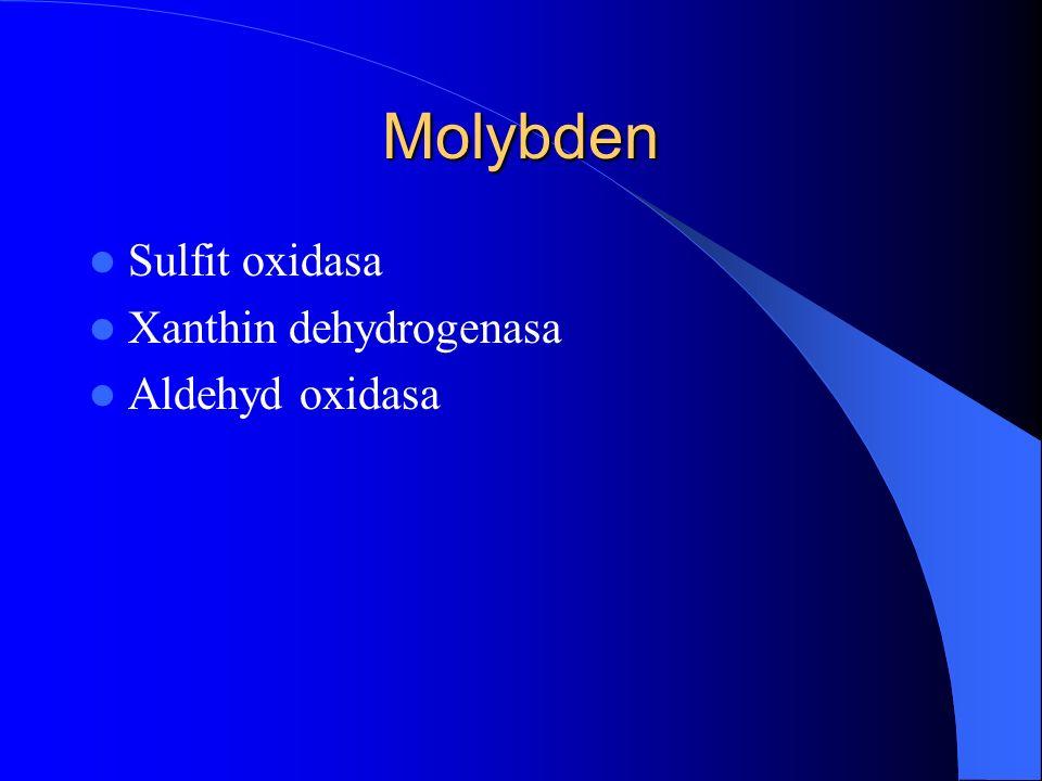 Molybden Sulfit oxidasa Xanthin dehydrogenasa Aldehyd oxidasa