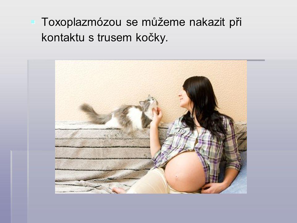  Toxoplazmózou se můžeme nakazit při kontaktu s trusem kočky.