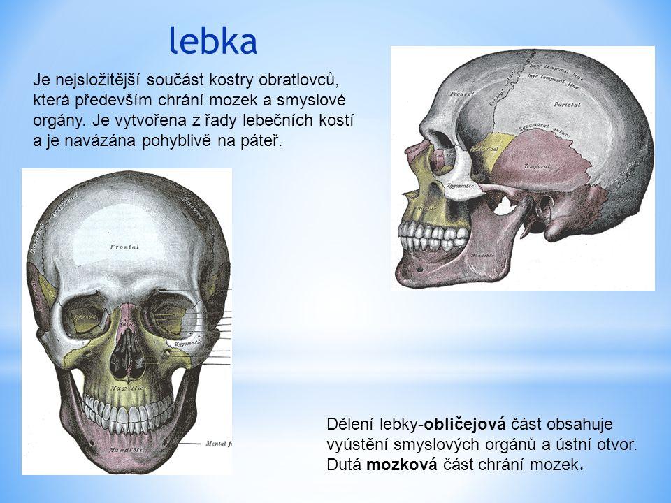 lebka Je nejsložitější součást kostry obratlovců, která především chrání mozek a smyslové orgány.