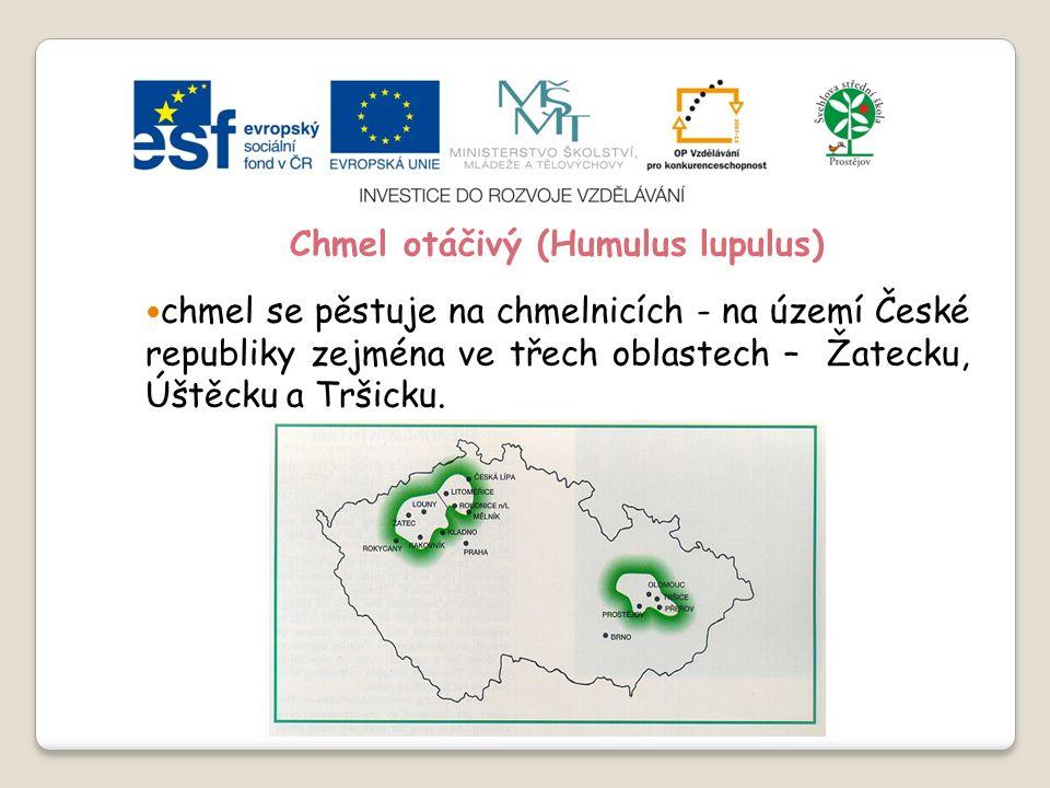 Slide 2…atd Chmel otáčivý (Humulus lupulus) chmel se pěstuje na chmelnicích - na území České republiky zejména ve třech oblastech – Žatecku, Úštěcku a Tršicku.