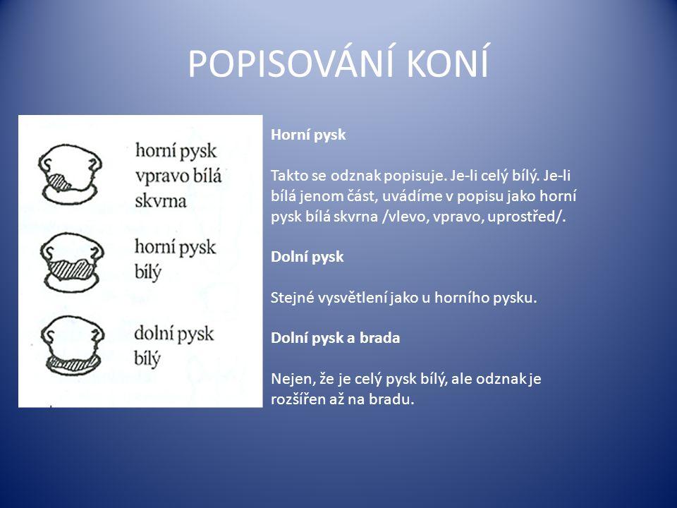 POPISOVÁNÍ KONÍ Horní pysk Takto se odznak popisuje.