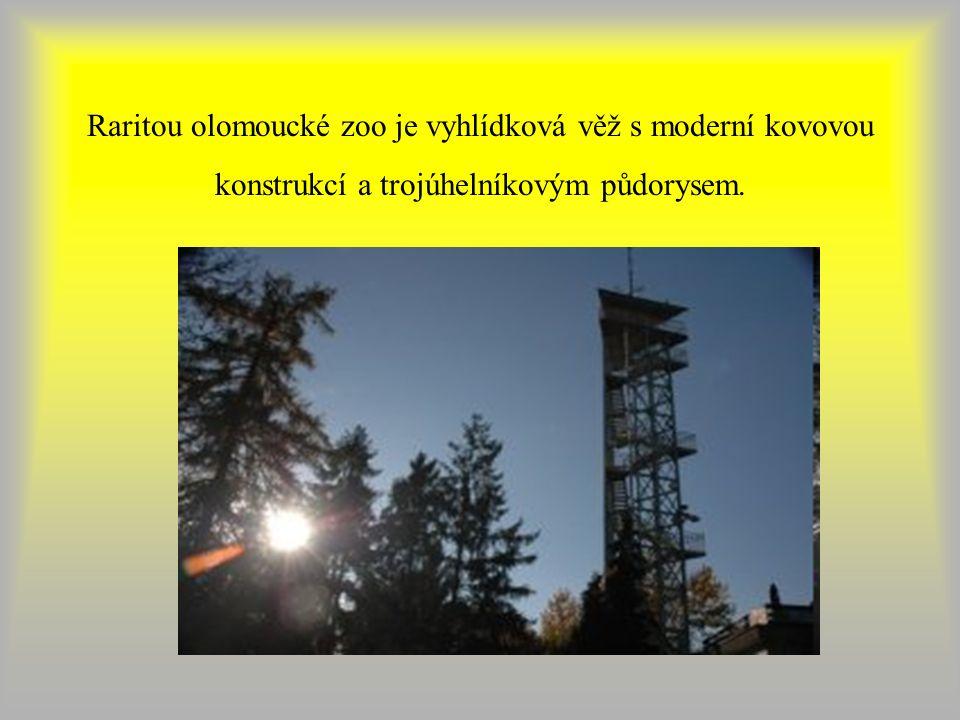 Raritou olomoucké zoo je vyhlídková věž s moderní kovovou konstrukcí a trojúhelníkovým půdorysem.