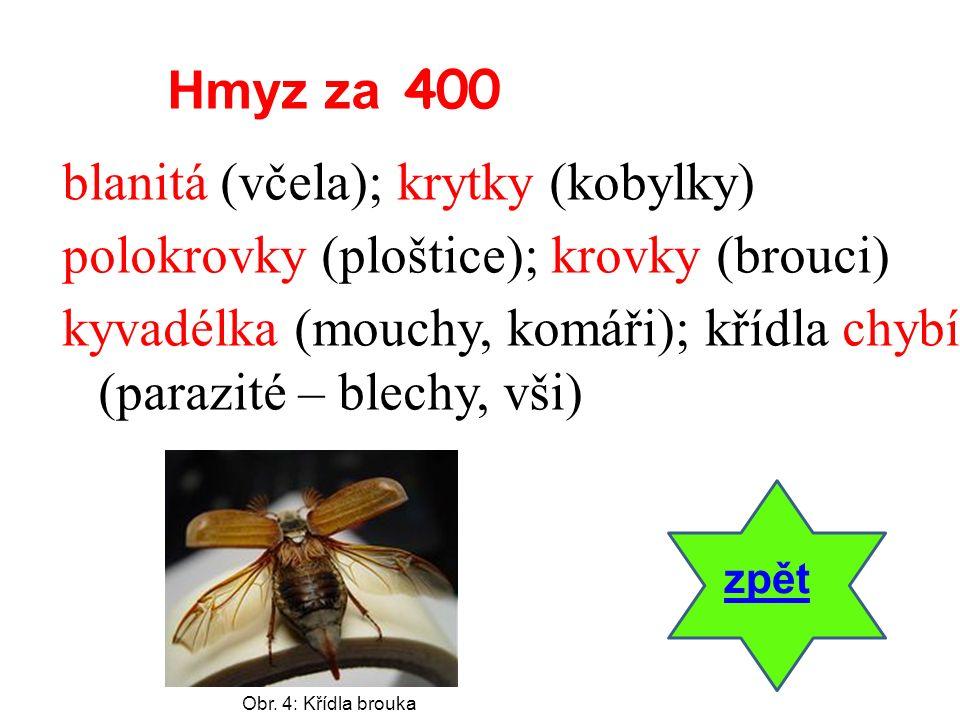 blanitá (včela); krytky (kobylky) polokrovky (ploštice); krovky (brouci) kyvadélka (mouchy, komáři); křídla chybí (parazité – blechy, vši) zpět Hmyz z