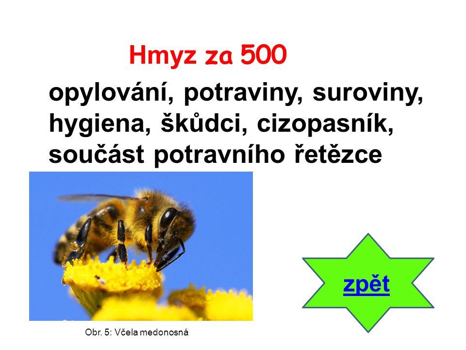 zpět opylování, potraviny, suroviny, hygiena, škůdci, cizopasník, součást potravního řetězce Hmyz za 500 Obr. 5: Včela medonosná