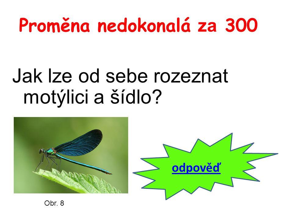 Proměna nedokonalá za 300 Jak lze od sebe rozeznat motýlici a šídlo odpověď Obr. 8