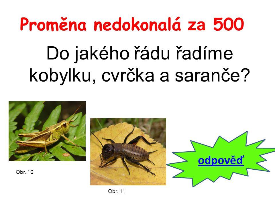 Proměna nedokonalá za 500 Do jakého řádu řadíme kobylku, cvrčka a saranče? odpověď Obr. 10 Obr. 11