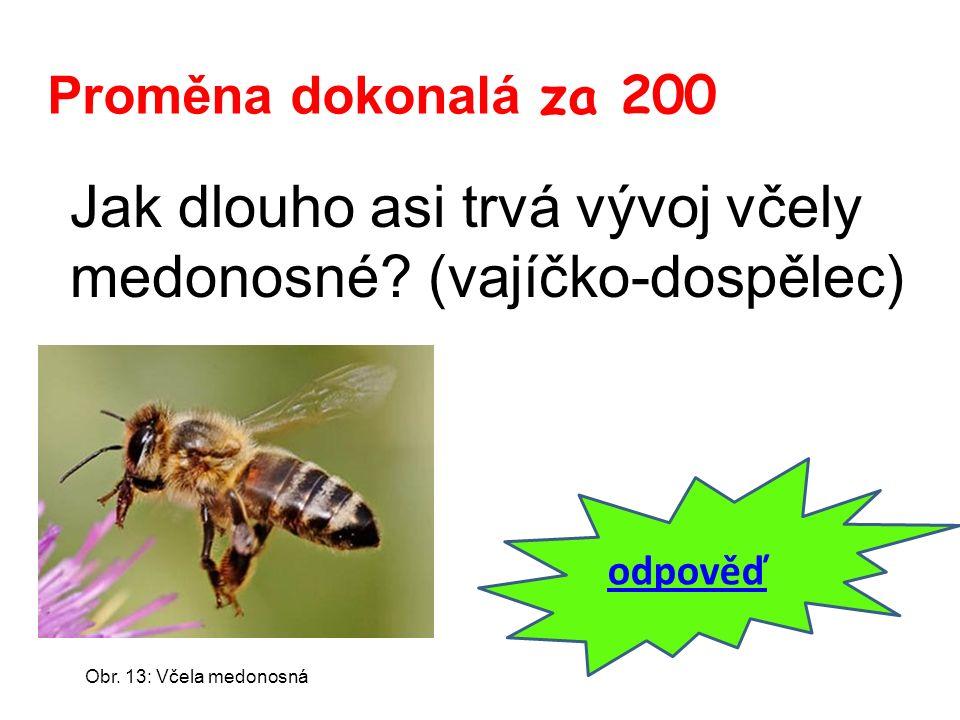 Proměna dokonalá za 200 Jak dlouho asi trvá vývoj včely medonosné? (vajíčko-dospělec) odpověď Obr. 13: Včela medonosná