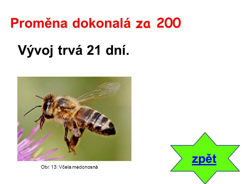 Vývoj trvá 21 dní. zpět Proměna dokonalá za 200 Obr. 13: Včela medonosná