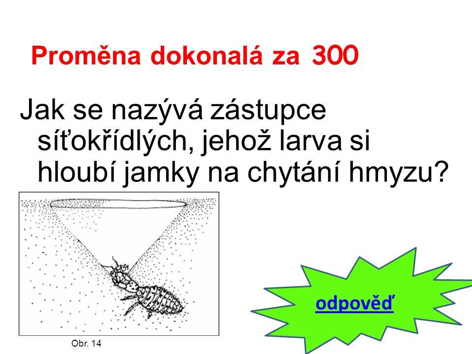 Proměna dokonalá za 300 Jak se nazývá zástupce síťokřídlých, jehož larva si hloubí jamky na chytání hmyzu? odpověď Obr. 14