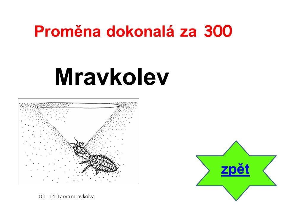 Mravkolev zpět Proměna dokonalá za 300 Obr. 14: Larva mravkolva
