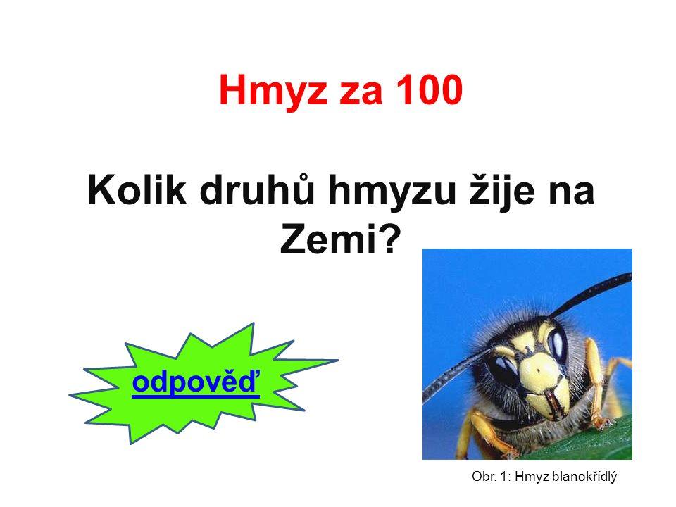 Na Zemi žije přes 1 milión druhů. zpět Hmyz za 100