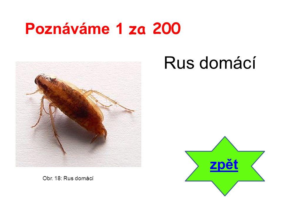 zpět Poznáváme 1 za 200 Obr. 18: Rus domácí Rus domácí