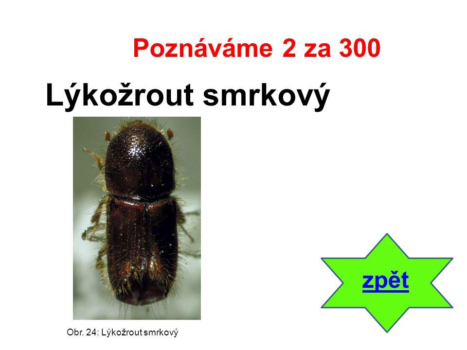 zpět Lýkožrout smrkový Poznáváme 2 za 300 Obr. 24: Lýkožrout smrkový
