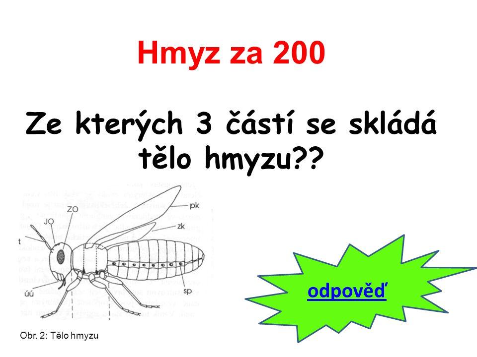 Hmyz za 200 Ze kterých 3 částí se skládá tělo hmyzu?? odpověď Obr. 2: Tělo hmyzu