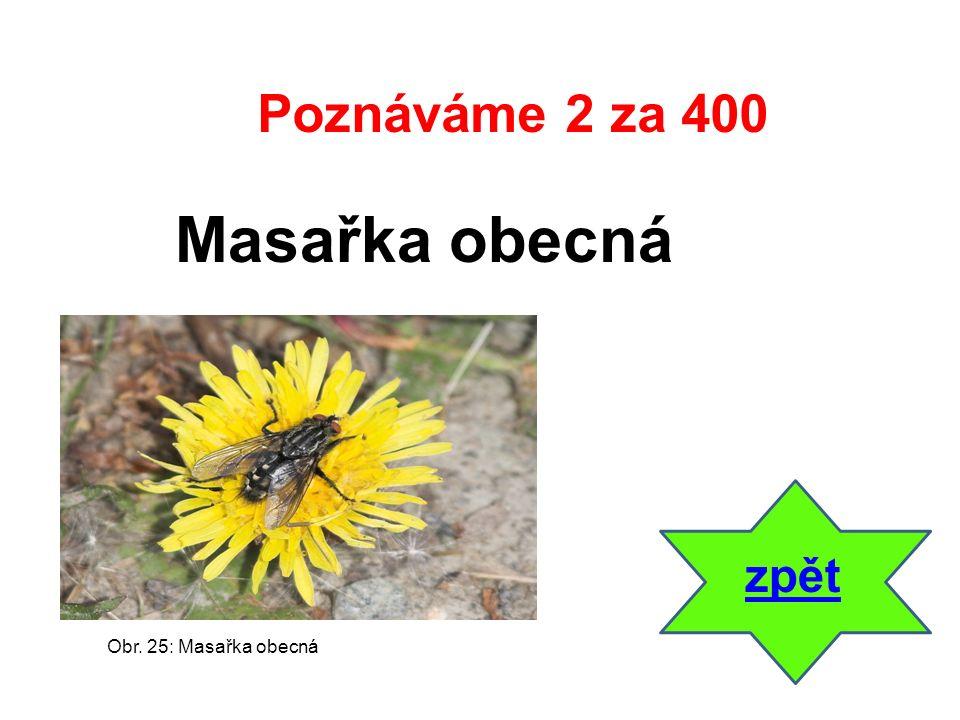 zpět Masařka obecná Poznáváme 2 za 400 Obr. 25: Masařka obecná