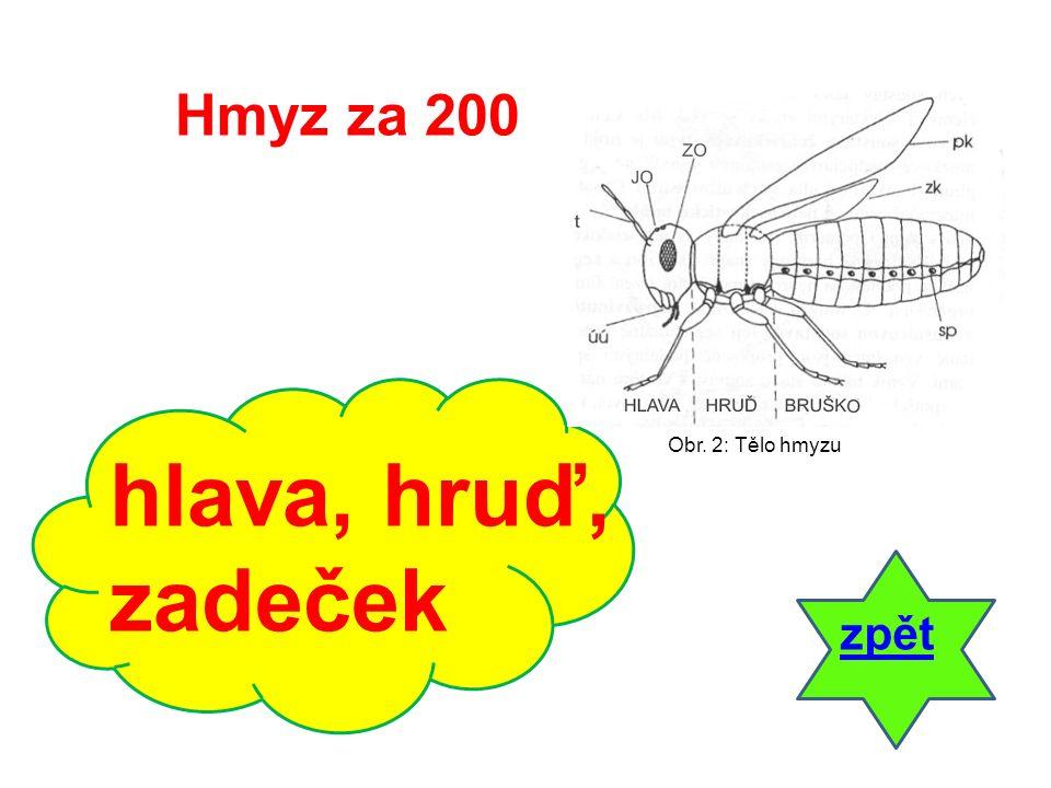 Hmyz za 300 Jaké znáš typy končetin hmyzu? odpověď Obr. 3: Končetina hmyzu