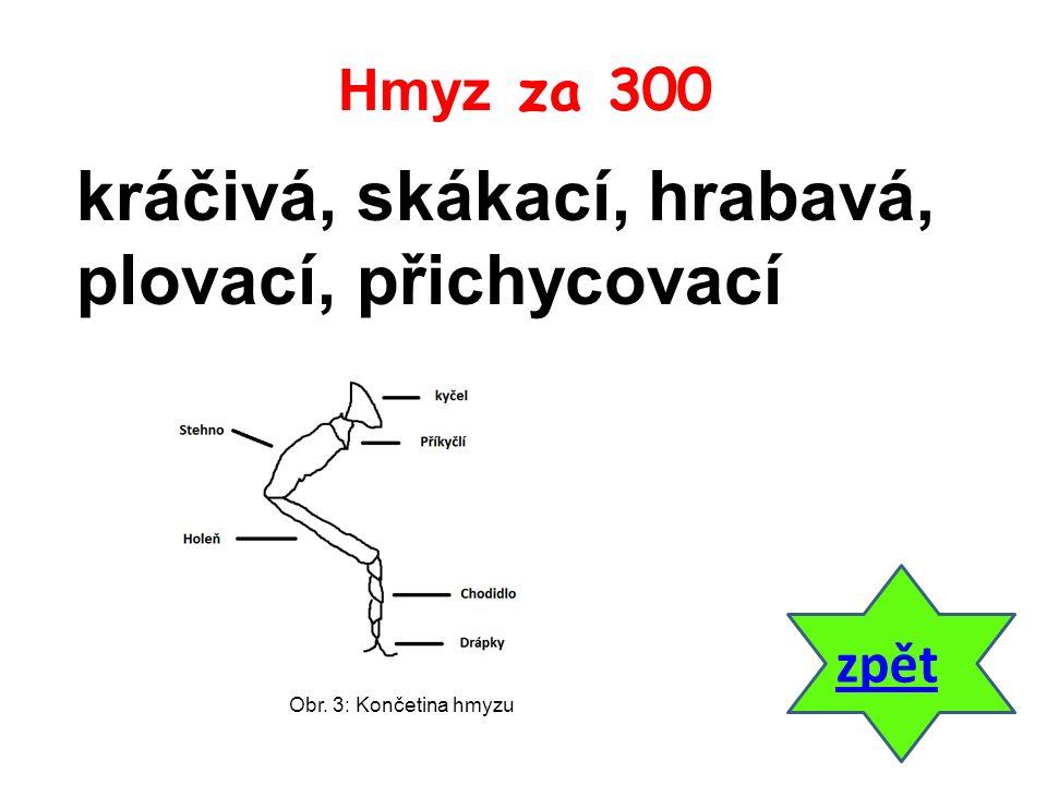 odpověď Poznáváme 2 za 400 Urči zástupce na obrázku. Obr. 25