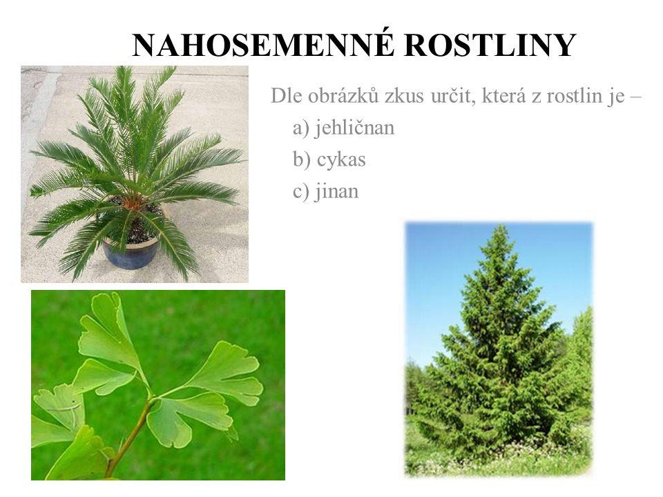 NAHOSEMENNÉ ROSTLINY Dle obrázků zkus určit, která z rostlin je – a) jehličnan b) cykas c) jinan