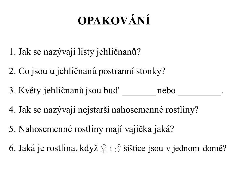 OPAKOVÁNÍ 1. Jak se nazývají listy jehličnanů. 2.