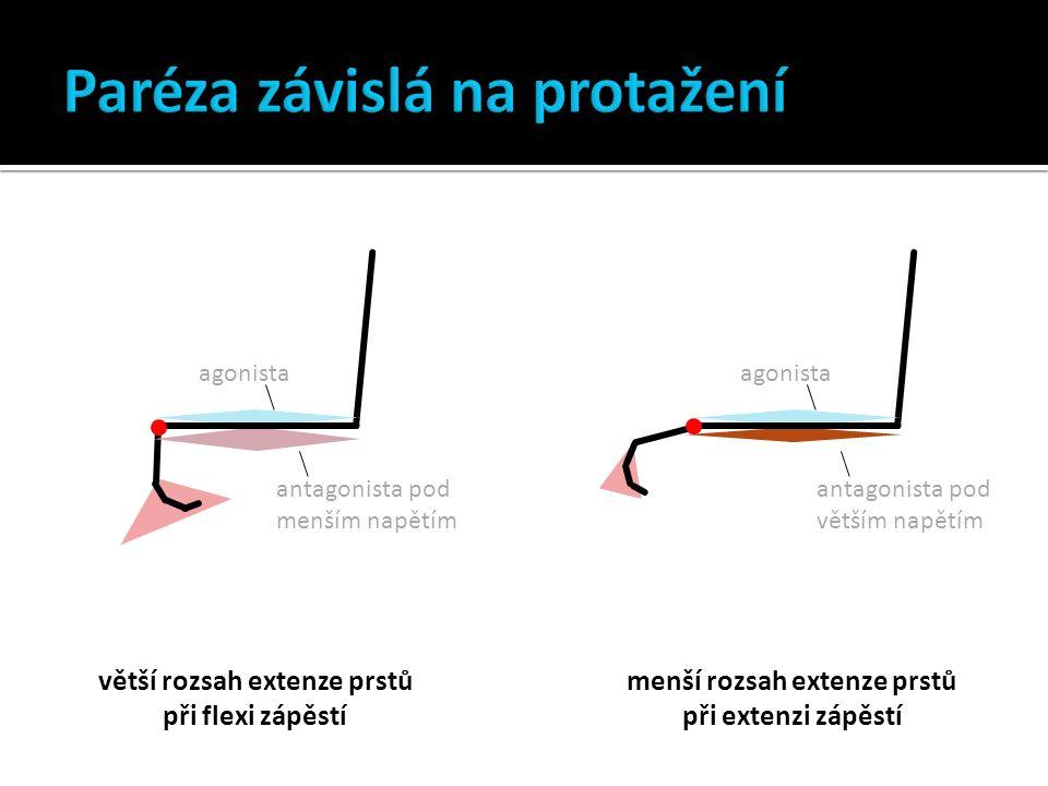 agonista antagonista pod menším napětím agonista antagonista pod větším napětím větší rozsah extenze prstů při flexi zápěstí menší rozsah extenze prstů při extenzi zápěstí