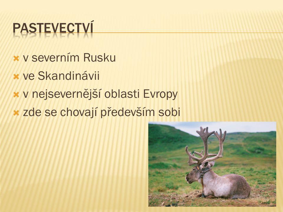  v severním Rusku  ve Skandinávii  v nejsevernější oblasti Evropy  zde se chovají především sobi