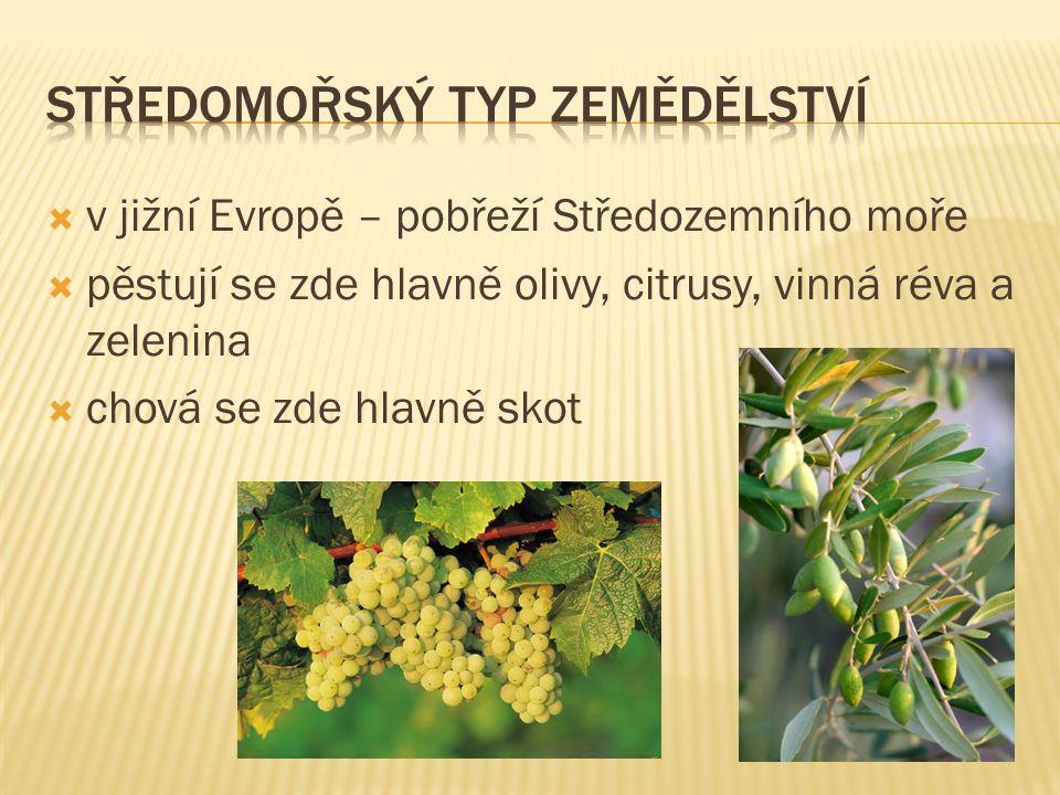  v jižní Evropě – pobřeží Středozemního moře  pěstují se zde hlavně olivy, citrusy, vinná réva a zelenina  chová se zde hlavně skot