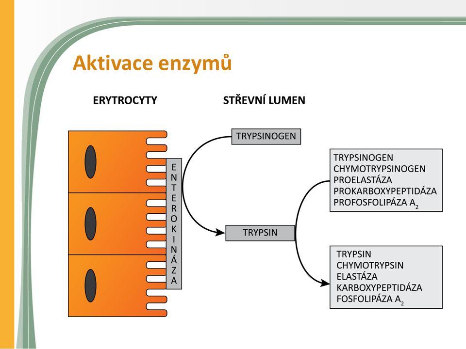 Aktivace enzymů
