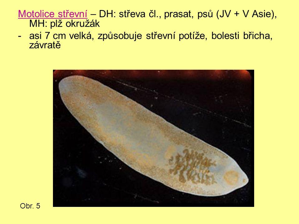 Motolice střevní – DH: střeva čl., prasat, psů (JV + V Asie), MH: plž okružák -asi 7 cm velká, způsobuje střevní potíže, bolesti břicha, závratě Obr.