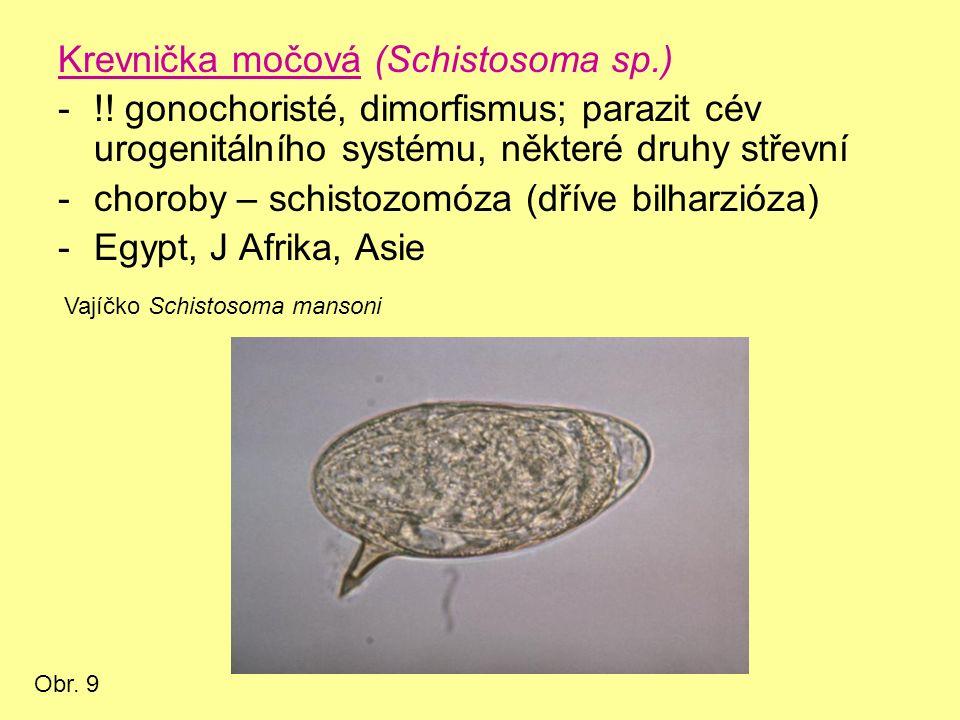Krevnička močová (Schistosoma sp.) -!.