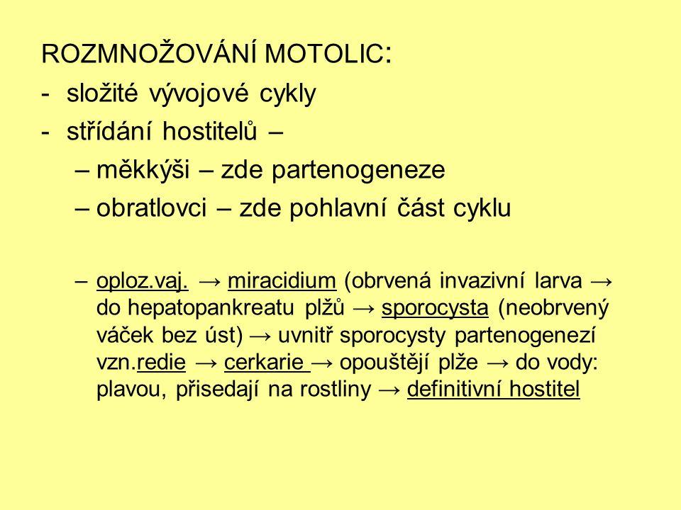 Životní cyklus motolic: Obr. 1