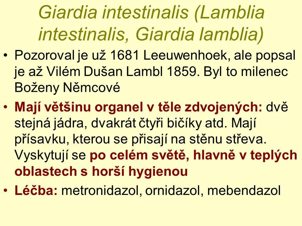 Giardia intestinalis (Lamblia intestinalis, Giardia lamblia) Pozoroval je už 1681 Leeuwenhoek, ale popsal je až Vilém Dušan Lambl 1859.