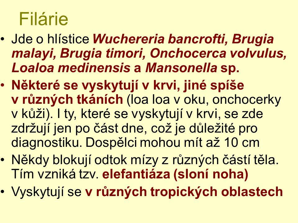 Filárie Jde o hlístice Wuchereria bancrofti, Brugia malayi, Brugia timori, Onchocerca volvulus, Loaloa medinensis a Mansonella sp. Některé se vyskytuj