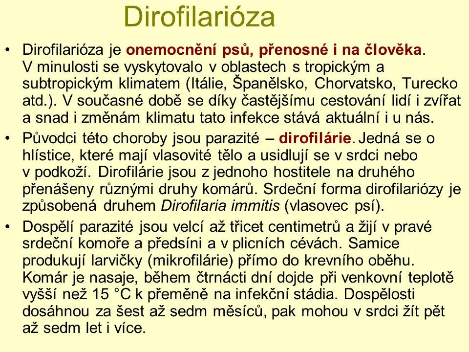 Dirofilarióza Dirofilarióza je onemocnění psů, přenosné i na člověka. V minulosti se vyskytovalo v oblastech s tropickým a subtropickým klimatem (Itál