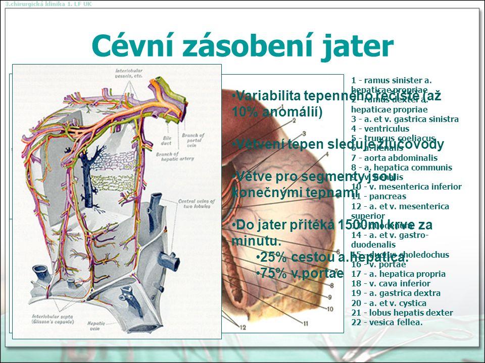 Cévní zásobení jater 1 - ramus sinister a. hepaticae propriae 2 - ramus dexter a.