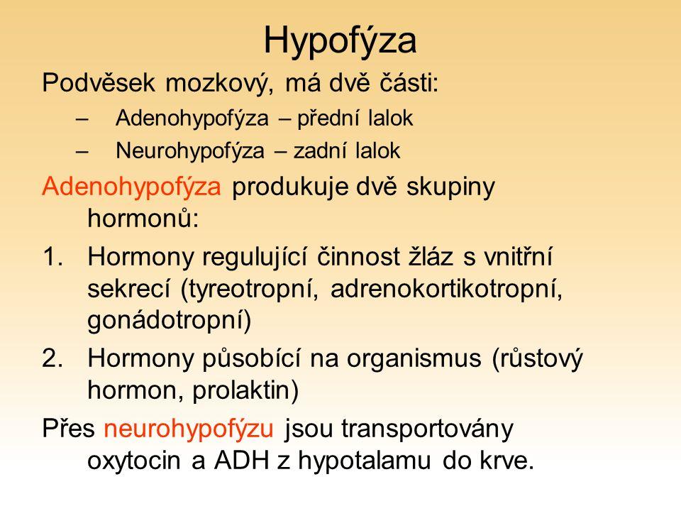 Hypofýza Podvěsek mozkový, má dvě části: –Adenohypofýza – přední lalok –Neurohypofýza – zadní lalok Adenohypofýza produkuje dvě skupiny hormonů: 1.Hormony regulující činnost žláz s vnitřní sekrecí (tyreotropní, adrenokortikotropní, gonádotropní) 2.Hormony působící na organismus (růstový hormon, prolaktin) Přes neurohypofýzu jsou transportovány oxytocin a ADH z hypotalamu do krve.
