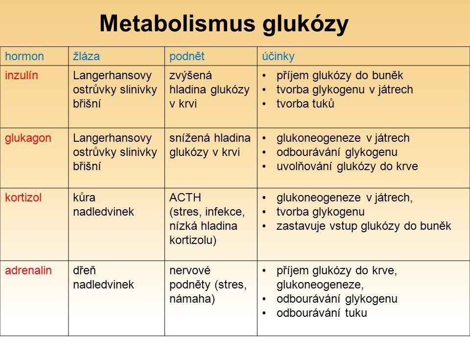 hormonžlázapodnětúčinky inzulínLangerhansovy ostrůvky slinivky břišní zvýšená hladina glukózy v krvi příjem glukózy do buněk tvorba glykogenu v játrech tvorba tuků glukagonLangerhansovy ostrůvky slinivky břišní snížená hladina glukózy v krvi glukoneogeneze v játrech odbourávání glykogenu uvolňování glukózy do krve kortizolkůra nadledvinek ACTH (stres, infekce, nízká hladina kortizolu) glukoneogeneze v játrech, tvorba glykogenu zastavuje vstup glukózy do buněk adrenalindřeň nadledvinek nervové podněty (stres, námaha) příjem glukózy do krve, glukoneogeneze, odbourávání glykogenu odbourávání tuku Metabolismus glukózy