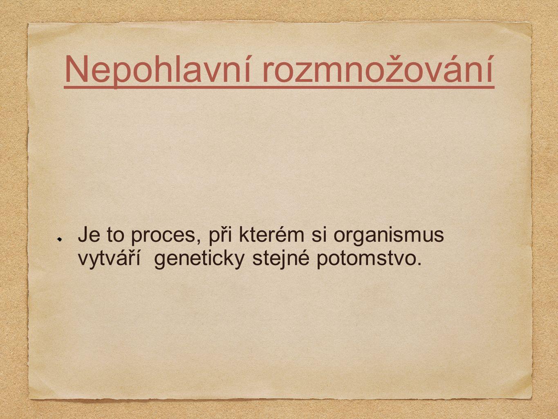 Nepohlavní rozmnožování Je to proces, při kterém si organismus vytváří geneticky stejné potomstvo.