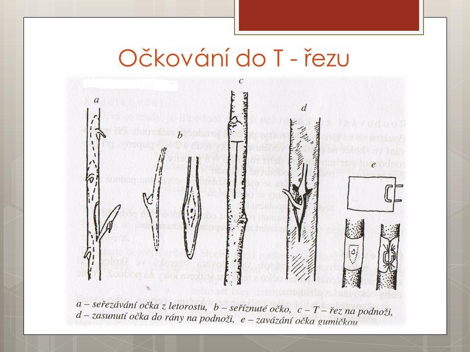 Zdroje  DVOŘÁČEK, Pavel.Sadovnictví: pro odborná učiliště.